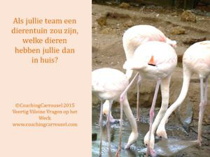 team-dierentuin-metafoor-teambuilding-SophiaMagazine