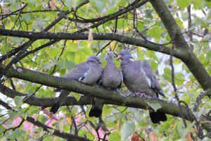 overgang-vroege-vogels-duiven-SophiaMagazine